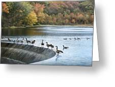 Dam Geese Greeting Card