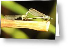 Damselflies In Nature Greeting Card