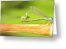 Damselflies Greeting Card
