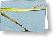 Damselfly Reflection Greeting Card