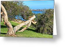 Dana Point Harbor Channel Greeting Card