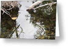 Dance Of The Water Spider Greeting Card