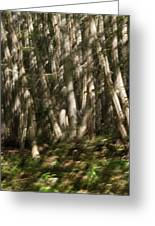 Dancing Birches Greeting Card