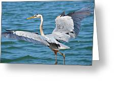 Dancing By Water Greeting Card