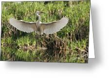 Dancing Egret Greeting Card