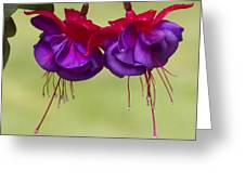 Dancing In The Breeze Greeting Card by Elvira Butler