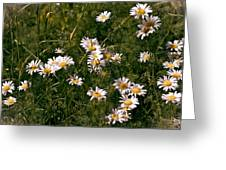 Dancing In The Field Greeting Card