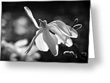 Dancing Lady. Greeting Card