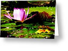 Dancing Pink Water Lilly Greeting Card