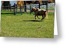 Dancing Pony Greeting Card