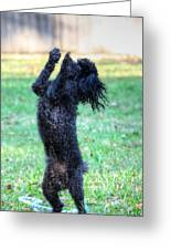Dancing Poodle Greeting Card