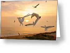 Dancing Seagulls Greeting Card