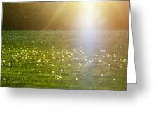 Dandelion And Meadows In Back-light Greeting Card