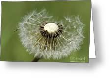 Dandelion Half Gone Greeting Card