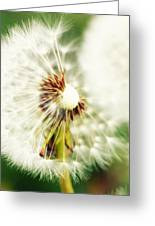 Dandelion No2 Greeting Card