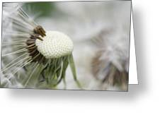 Dandelion Photograph Greeting Card