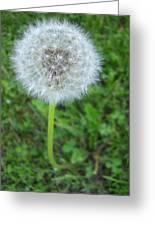 Dandelion Puff Greeting Card