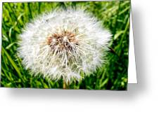 Dandelion Seedlings Greeting Card
