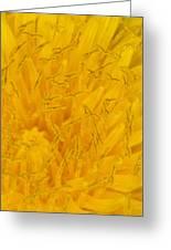 Dandelion Up Close Greeting Card