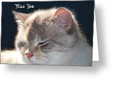 Daphne Cat Miss You Greeting Card