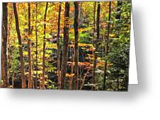 Dappled Sun On Fall Colors Greeting Card