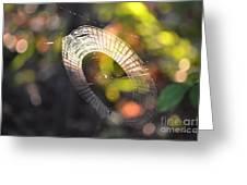 Dappled Web Of Deceit Greeting Card
