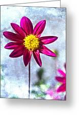 Dark Pink Dahlia On Blue Greeting Card