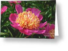 Dark Pink Peony Flower Series 3 Greeting Card
