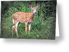 Darling Fawn Greeting Card
