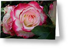 Darn Right I'm Gorgeous Greeting Card by Emerald GreenForest