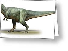 Daspletosaurus Torosus, A Prehistoric Greeting Card