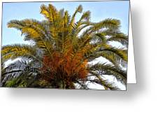 Date Palm Greeting Card