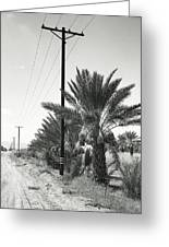 Date Palms On A Country Road Greeting Card