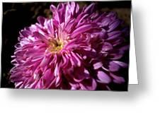 Dawn Flower Greeting Card