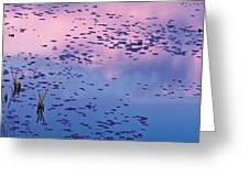 Dawn Sky Reflected In Pool Greeting Card