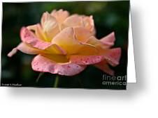 Day Breaker Floribunda Greeting Card