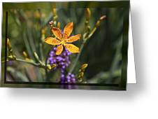 Day Lilly 46 Greeting Card by Charles Warren