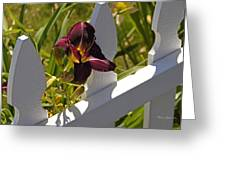 Day Lily And White Fence II Greeting Card