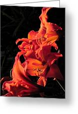 Day Lily Flame Greeting Card