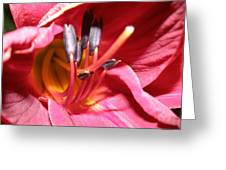 Day Lily In Red And Yellow Greeting Card