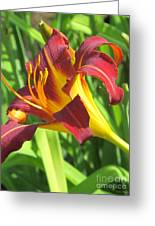 Day Lily Red And Yellow Greeting Card