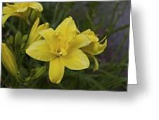 Daylily 3 Greeting Card