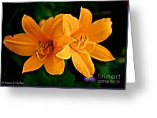 Daylily Duo Greeting Card