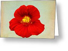 Daylily On Texture Greeting Card