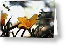 Daylily Sparkle Greeting Card