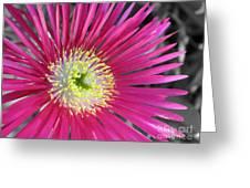 Dazzling Daisy Greeting Card