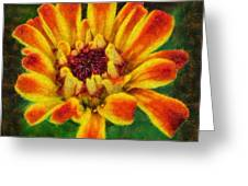 Dazzling Zinnia Greeting Card