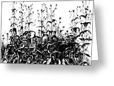 De Vries Experimental Garden Greeting Card