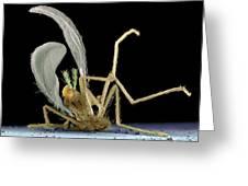 Dead Fly From Car Headlamp, Sem Greeting Card