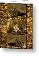 Dead Rosebud Triptych Greeting Card